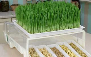 Выращивание зелени в домашней теплице как бизнес