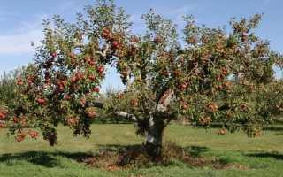 Вредители яблони — методы борьбы. Защита и обработка. Фото