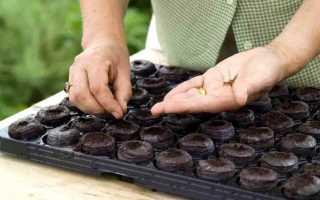 Как сажать семена в торфяные