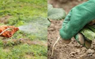 Гербициды от сорняков – виды, сроки применения, норма, видео