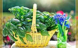 Базилик Анисовый Восторг – описание сорта, фото, отзывы садоводов