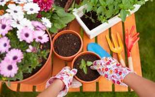 Как нужно сажать цветы в горшок