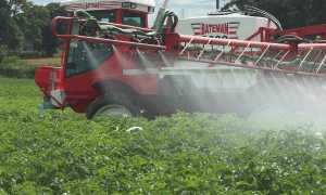 Гербициды для картофеля: фото и названия средств для защиты от сорняков
