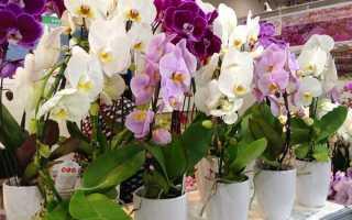 Все секреты правильного выбора кашпо для орхидеи. Стоит ли делать его своими руками?